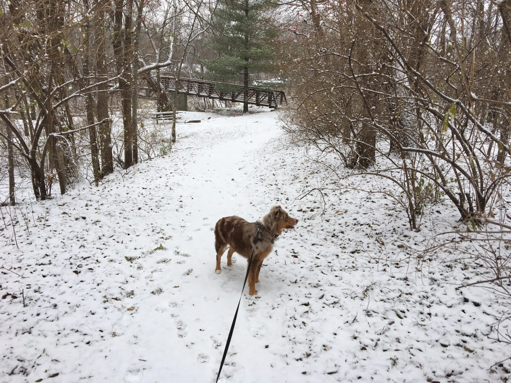 A winter walk through woods in Ames, with Avy